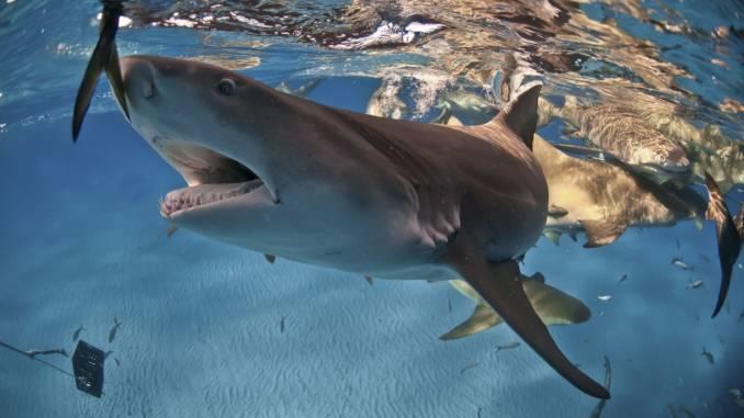 rekin-rekiny.jpg