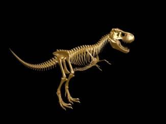 Tyranozaur-szkielet-dinozaur.jpg