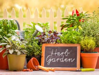 rośliny-i-zioła.jpg
