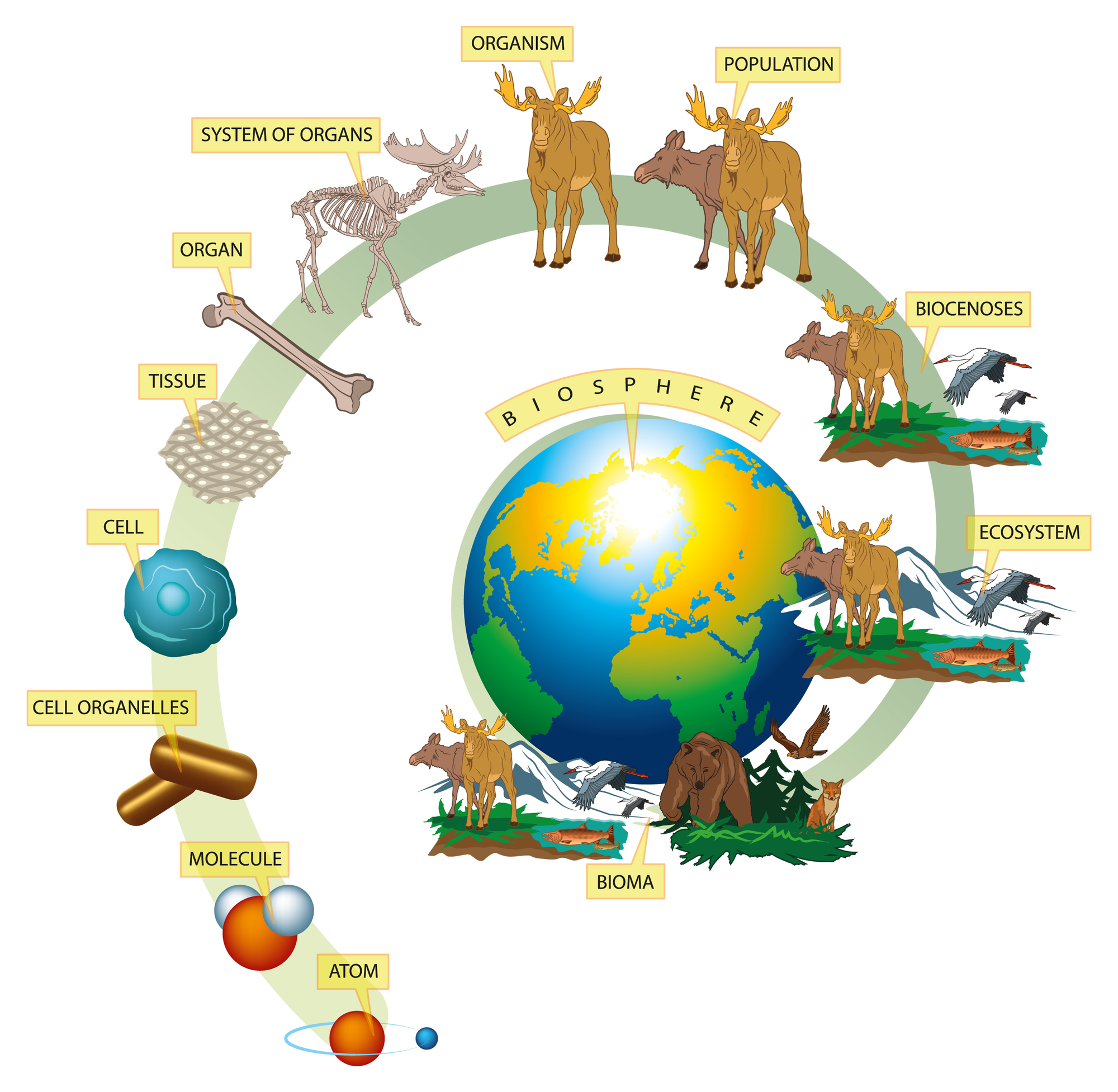 ekosystem.jpg