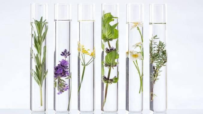 kwiatoterapia