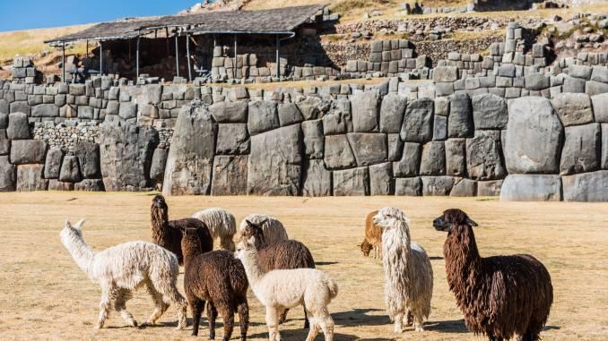 Sacsayhuaman-alpaki.jpg
