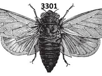 cykada-3301.jpg