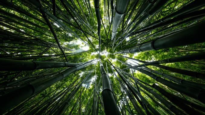 dolina-czarnego-bambusa.jpg