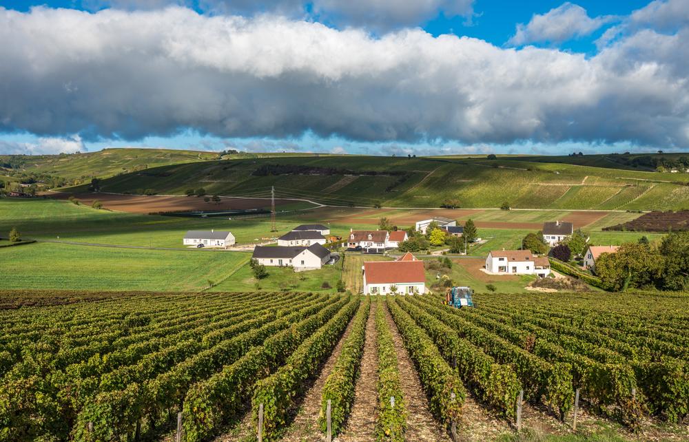 winnice-Dolina-Loary.jpg