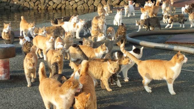 wyspy-kotów.jpg