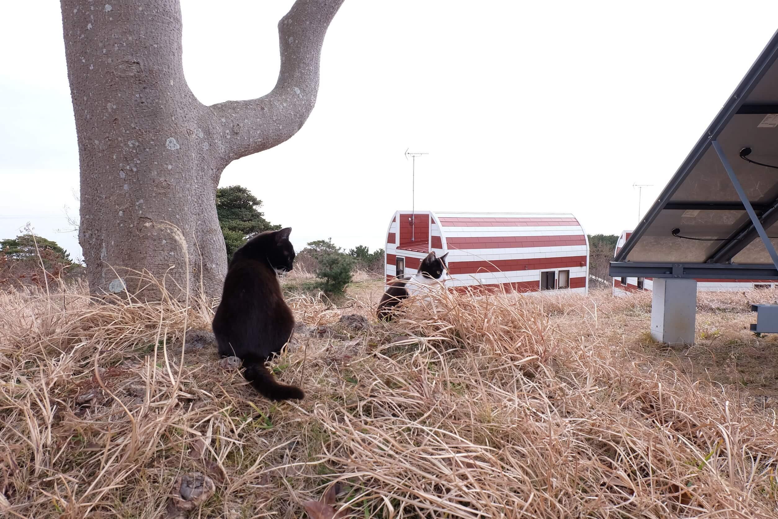 japońskie-wyspy-kotów.jpg