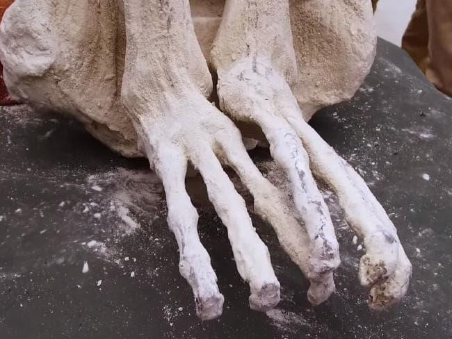 trójpalczasta-mumia.jpg