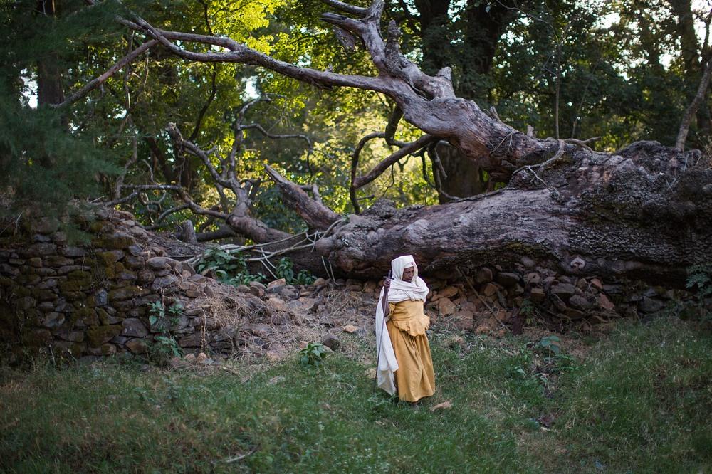 etiopia-święte-gaje.jpg
