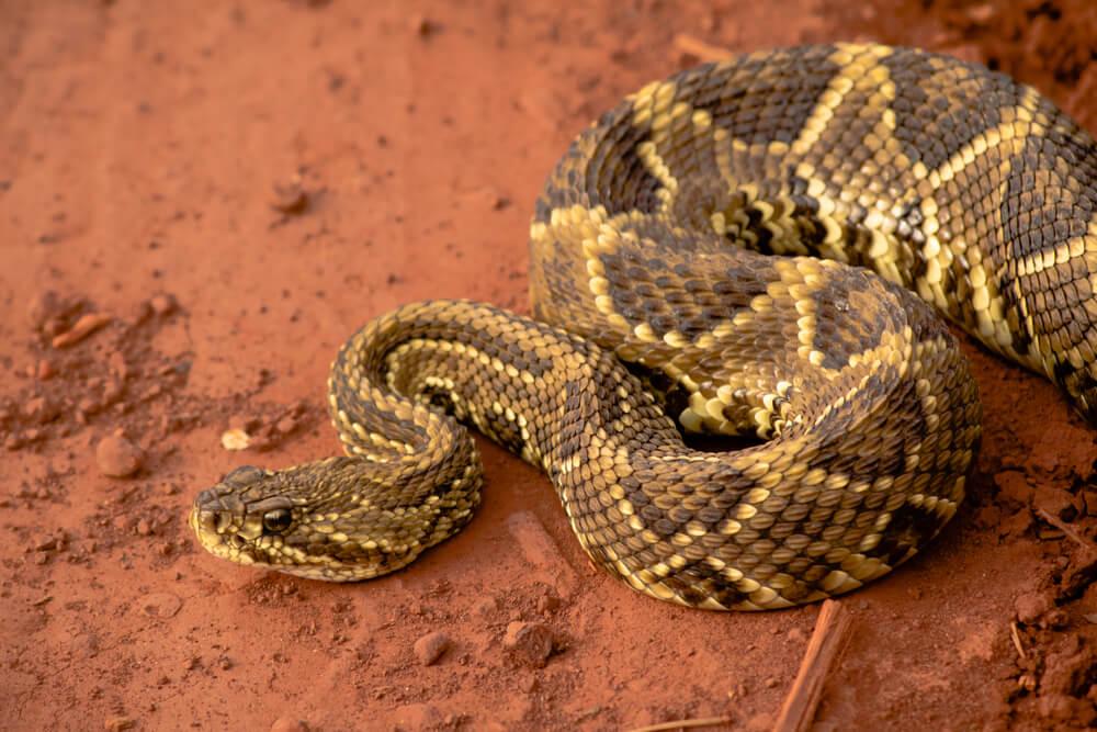 wąż.jpg