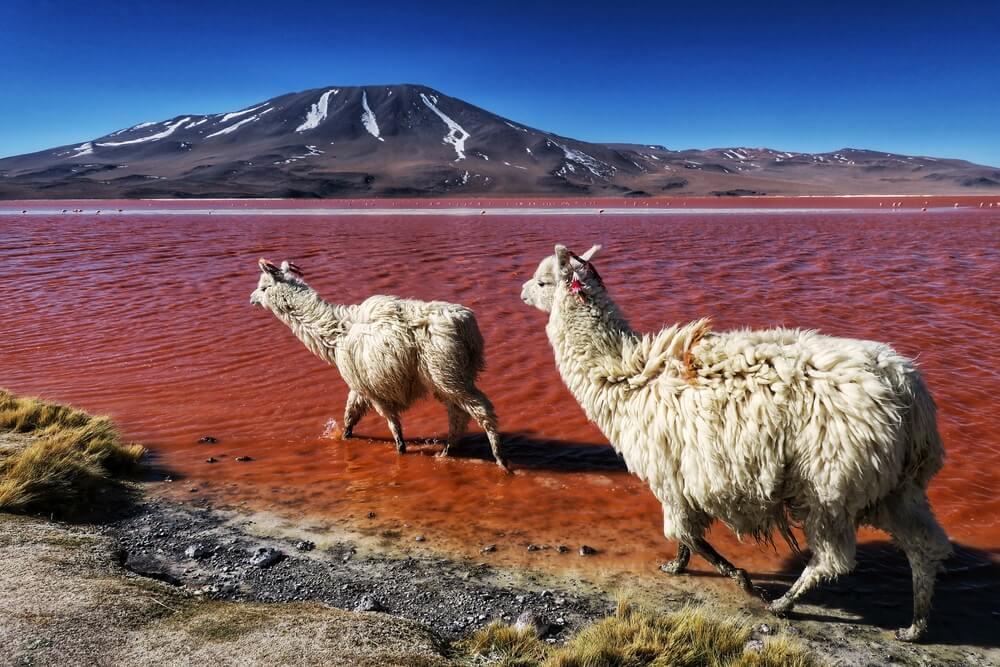 czerwone-jezioro.jpg