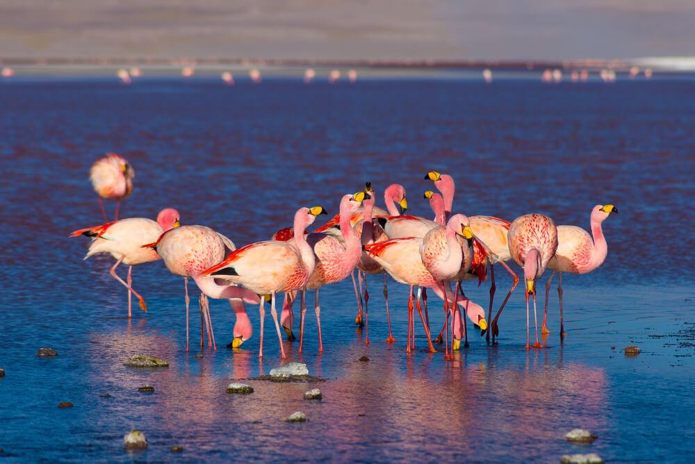 flamingi.jpg