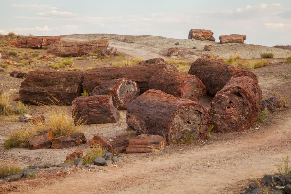 skamieniały-las.jpg