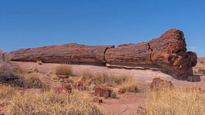 park-narodowy-skamieniałego-lasu.jpg